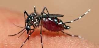 cropped Dengue