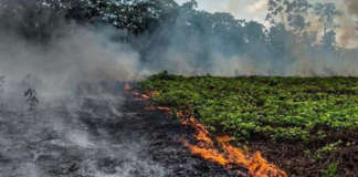 cropped Amazon rainforest fire