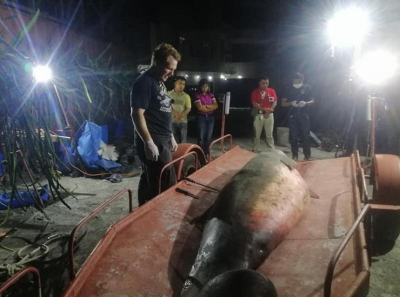 sperm whale pygmy davao city