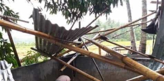 pigs hogs ASF South Cotabato