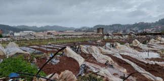 Benguet agri Typhoon Maring crops plants